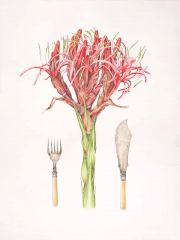 Deirdre Bean - Gymea Lily and Fish Servers - 72x52cm