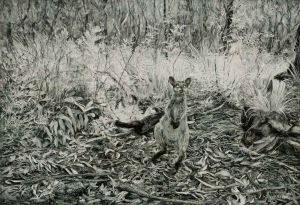 Kim Wilson - 'Swamp Wallaby I' - 24x35.1cm