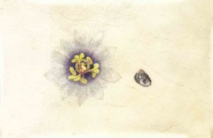Deirdre Bean - Passionflower and Periwinkle - 13x19cm